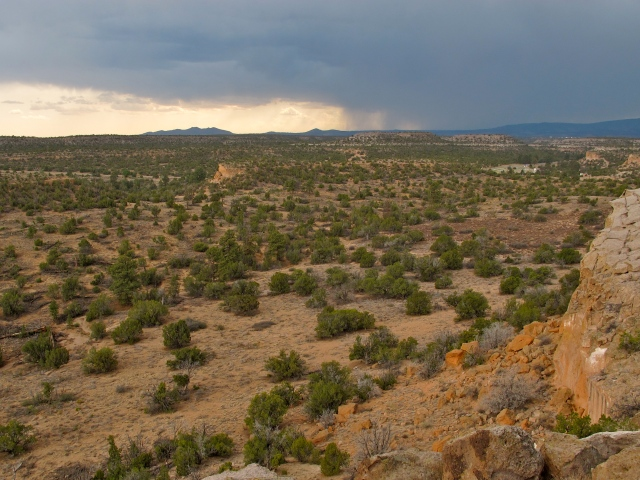 Bandelier burned badly in 2011, and the ecosystem is still recovering, as desert brush gives way to new pine growth.