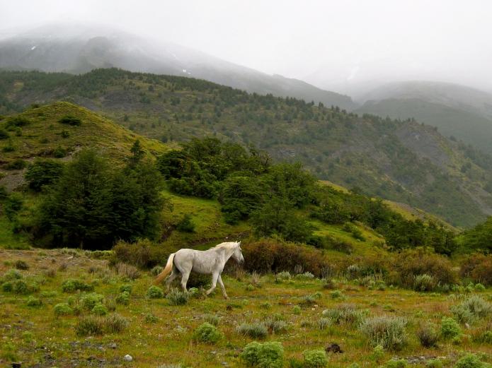 Wild horses [caballos salvajes]