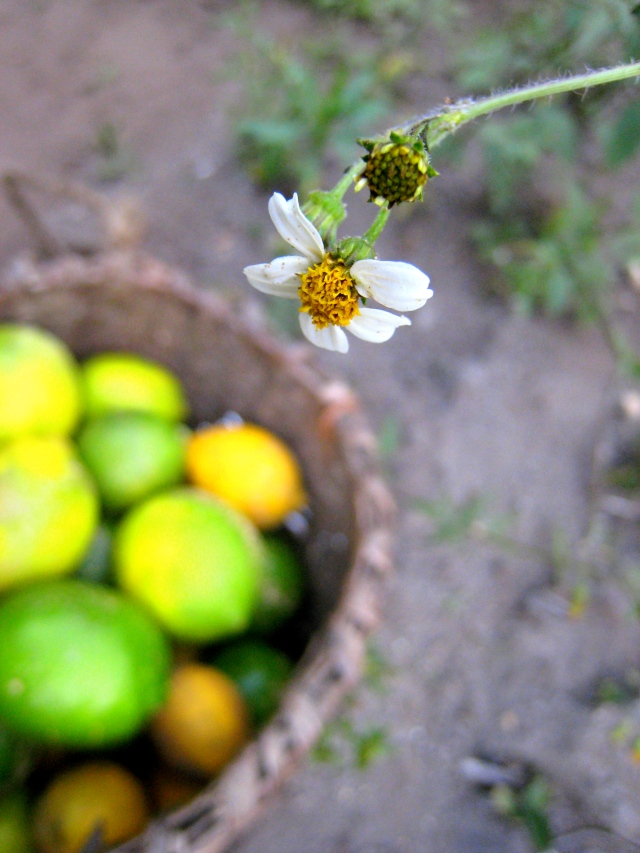Limas y flores