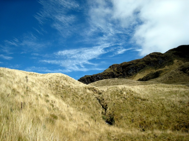 Grassy fields under clear blue skies