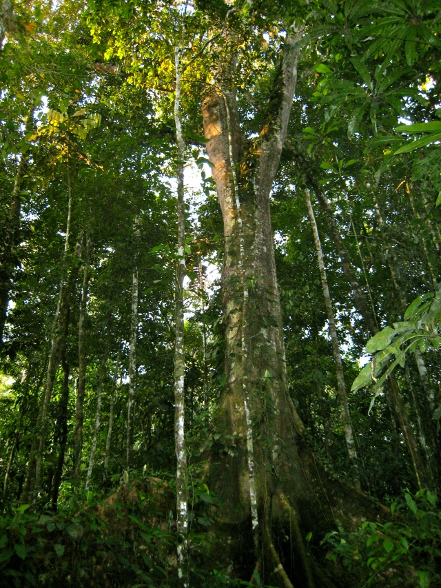 Rays of light penetrating the thick rainforest canopy